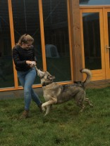 Spel met je hond - Sultana in Dierenbescherming Born