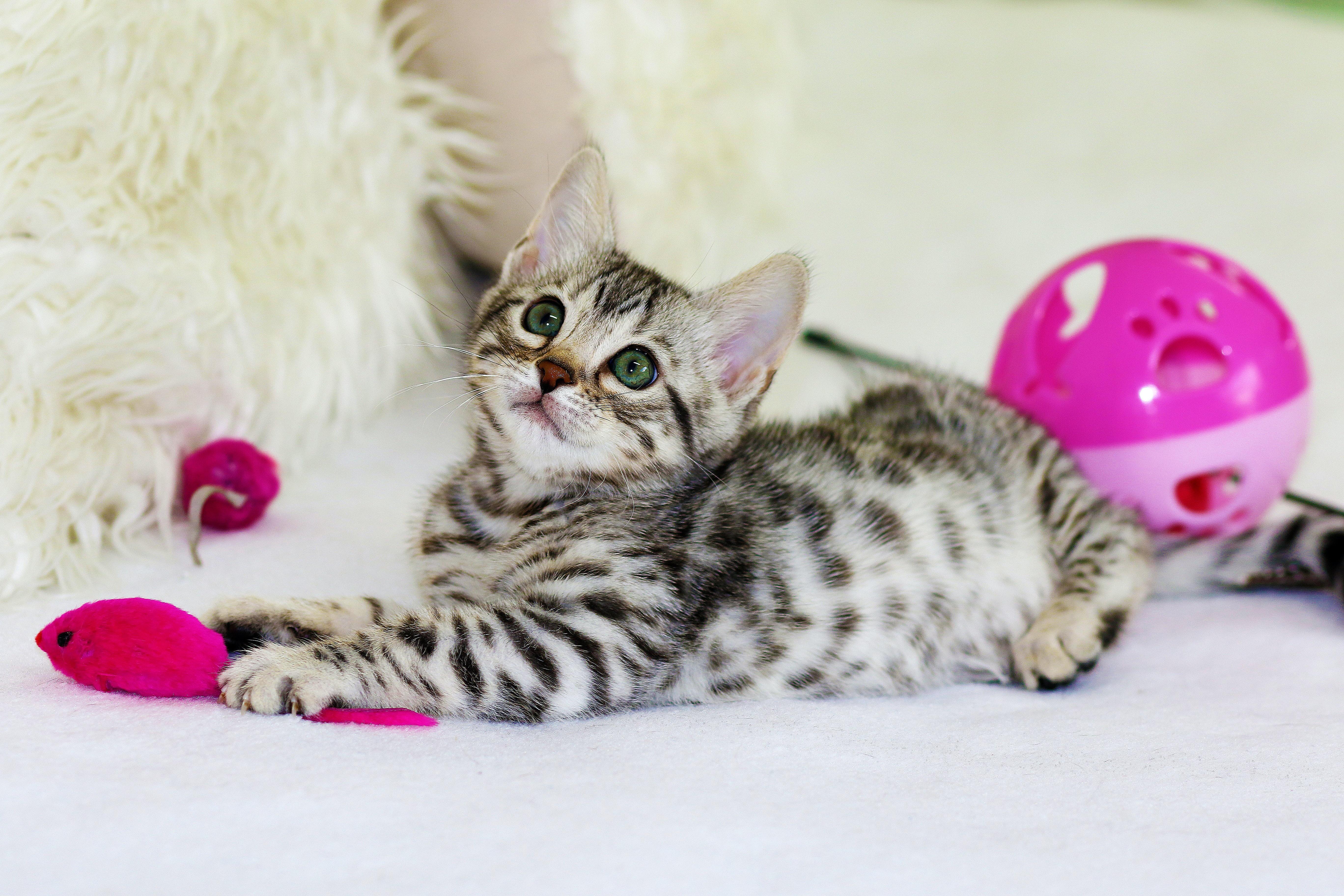 Help, mijn kitten valt mij aan!
