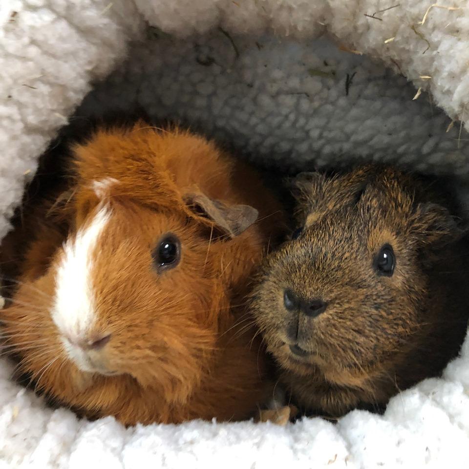Tijd voor tips #8: stress verlagen bij je knaagdier of konijn
