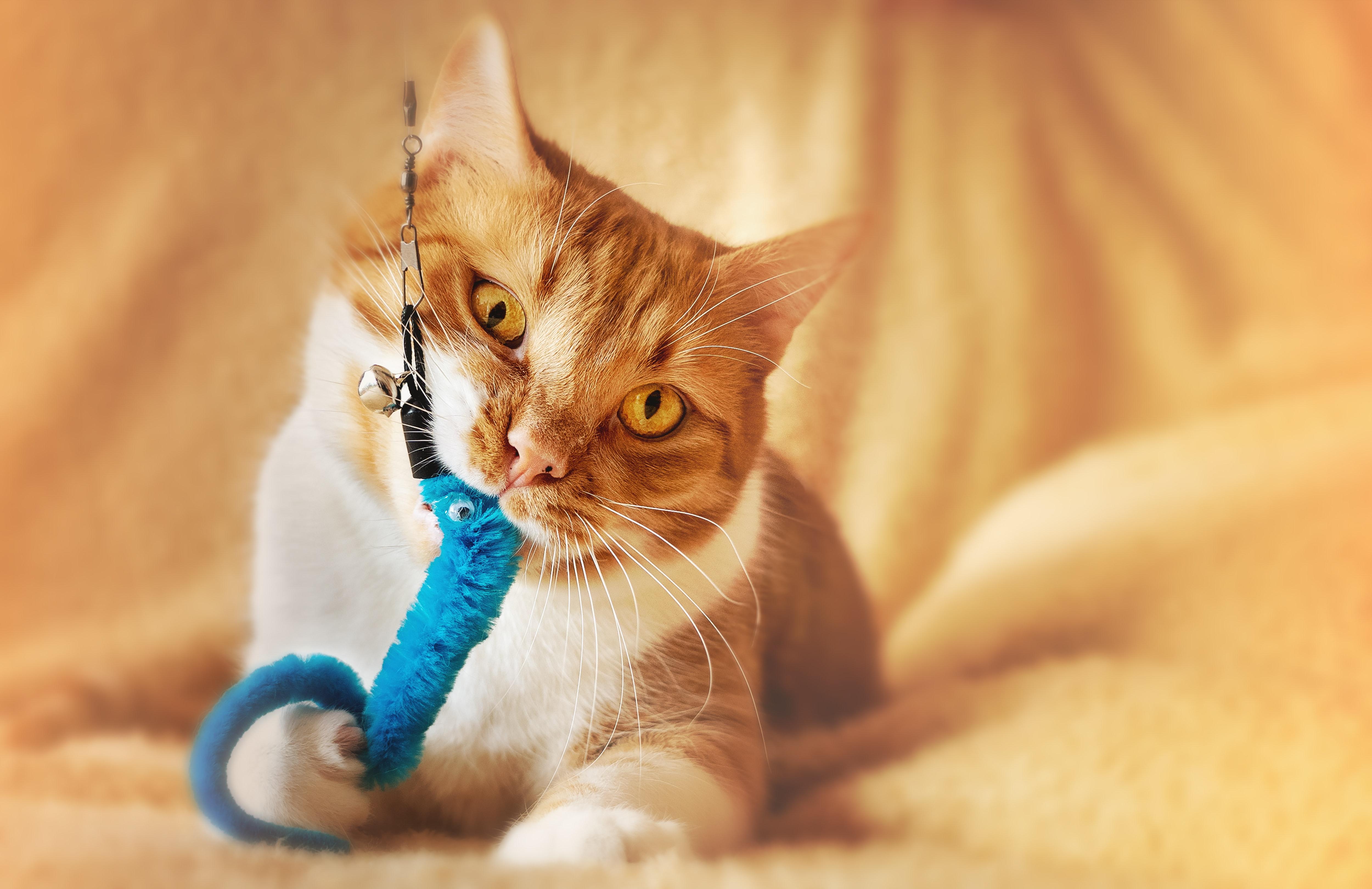 Kattenkennis #3: de fases waaruit spel bestaat